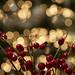 Christmas by Arjan Gerritsen