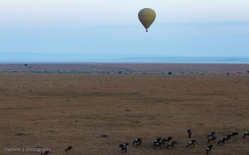 january kenya hotairballoonride 2017 wildebeest masaimara narokcounty ke