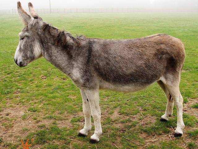 Donkey Ashley, Sony DSC-H20