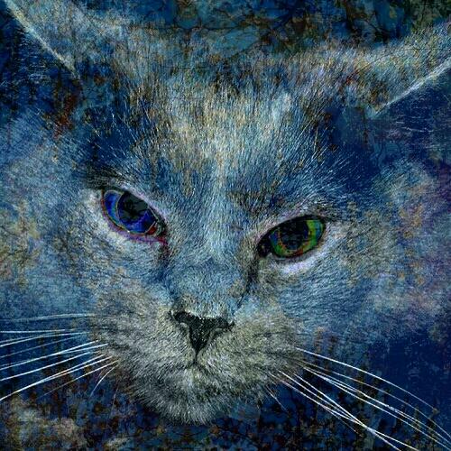 coloring book cat, blue...2017-03-15