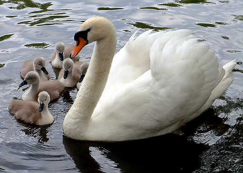Mum and kids