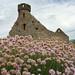 Peel Castle ruins with flowers... by idreamofdaylight