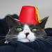 Fez Cat by nullstream