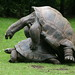Turtles have fun in Hannover Zoo by dheuer