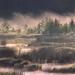 Foggy Marsh 1/3 by Jonas Thomén