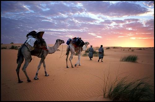 sunrise desert quality camel mauritania heatwaves abigfave karmapotd