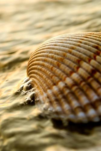 ocean sea surf shell clam hiltonhead 105mm hiltonheadsc hiltonheadplantation nikonstunninggallery geotaggedgeolat32269354geolon80721703 gregmullisphotography