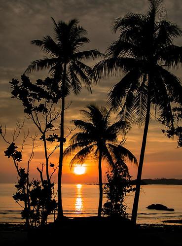 ocean sun beach sunrise palm tropical interestingness43 i500 challengeyouwinner goldenphotographer wowiekazowie