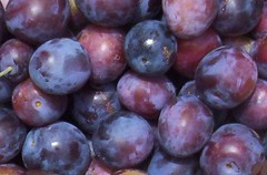 plant(0.0), zante currant(0.0), plum(1.0), berry(1.0), pluot(1.0), damson(1.0), grape(1.0), produce(1.0), fruit(1.0), food(1.0), myrciaria dubia(1.0),