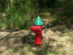 garden(0.0), fire hydrant(1.0),