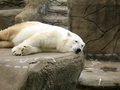 giant panda(0.0), animal(1.0), polar bear(1.0), mammal(1.0), bear(1.0),