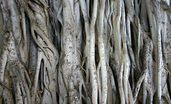 driftwood, wood, tree, trunk, close-up,