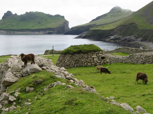 Soay sheep on Hirta, St Kilda, with Cleits