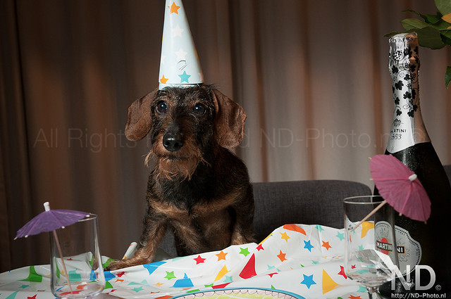 Ollie's 8th Birthday 14-08-2015