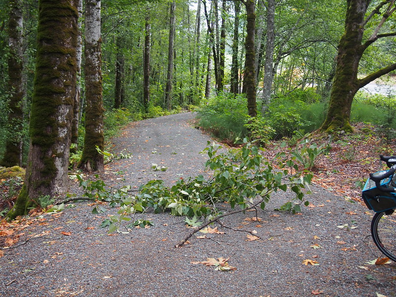 Downed Branch on Preston–Snoqualmie Trail: There was a lot of storm debris on the various trails out here, though most of it was smaller than this.