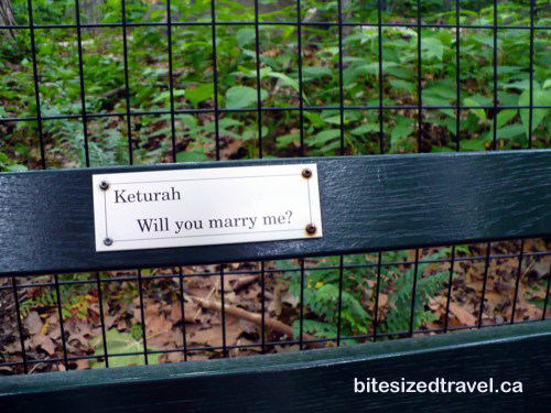 Romantic marriage proposal bench in New York Central Park