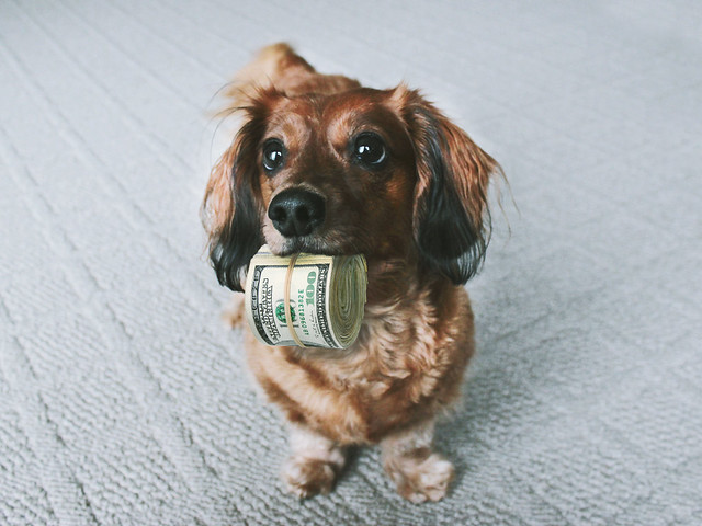 Cute Dog with Money