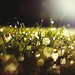 9/365 September Dew by ewitsoe