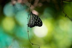 Hiran Kevitiyagala photograghy-9.jpg
