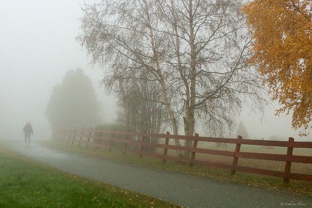 One foggy day in autumn...