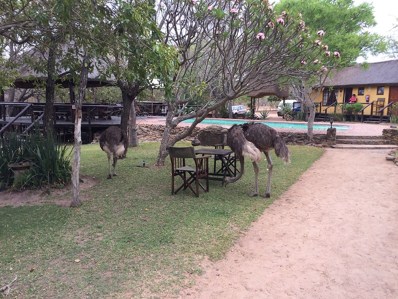 South Africa - Thornhill Safari Lodge - LBT 2014