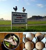 Chicken and egg situation by cu♥re di marmo