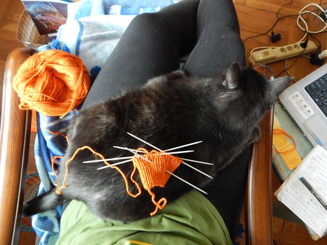 кот на ручках и оранжевая варежка