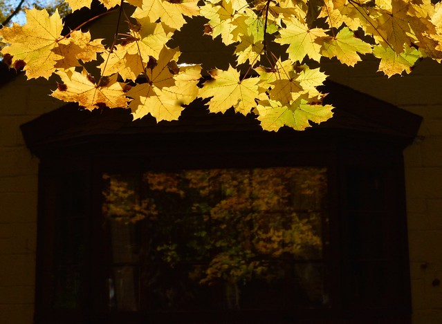Leaves reflected
