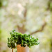 Parsley. I shall but miss the Karanj. by ~Dr.Silpa S GLH~