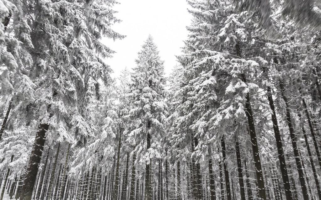 winterwald [explore]