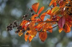 Autumnal....