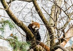 Animalier Parc de la Tête d'Or Lyon Janvier 2017