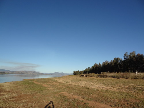 Greenfleet's native forest planted in the Bowna Waters Reserve bertween 2002 and 2003, along Lake Hume, NSW (photo taken in 2012)
