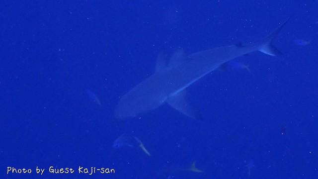 サメもすごかった!