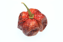 dry Chili Bhut-Jolokia or Naga-Jolokia-Chili, one…