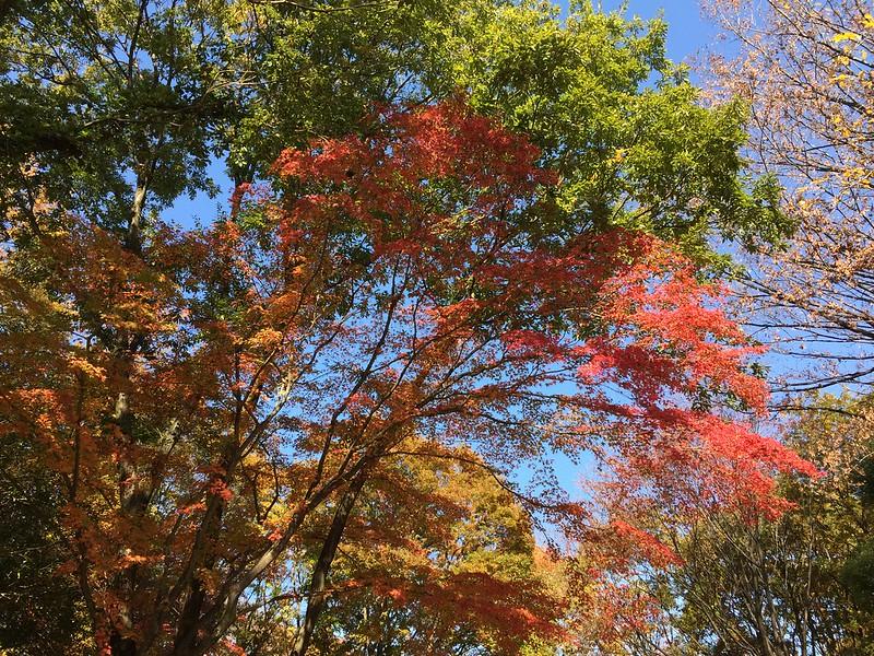 昭和記念公園 Showa Kinen Park-0005