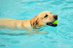 Paws in the Pool CCAC 2015-9.jpg