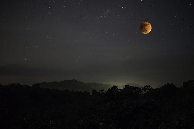 rainforestlunar
