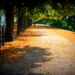 Avenham walkway in Autumn