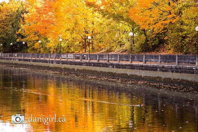 Autumn on the Rideau Canal