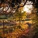 Autumn Walk home. by Mark Candlin