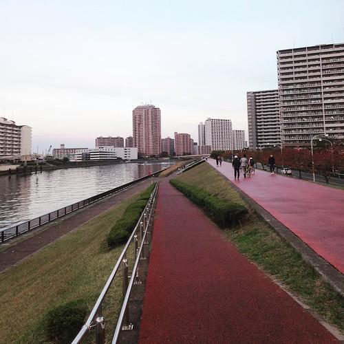そしていつもの、隅田川沿い。走るよ。