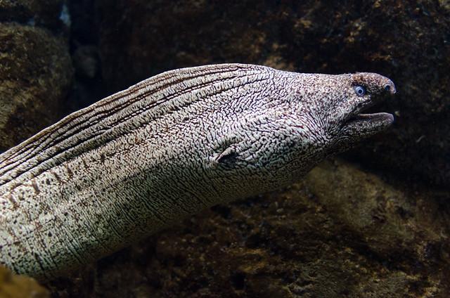 Crete Aquarium-4261