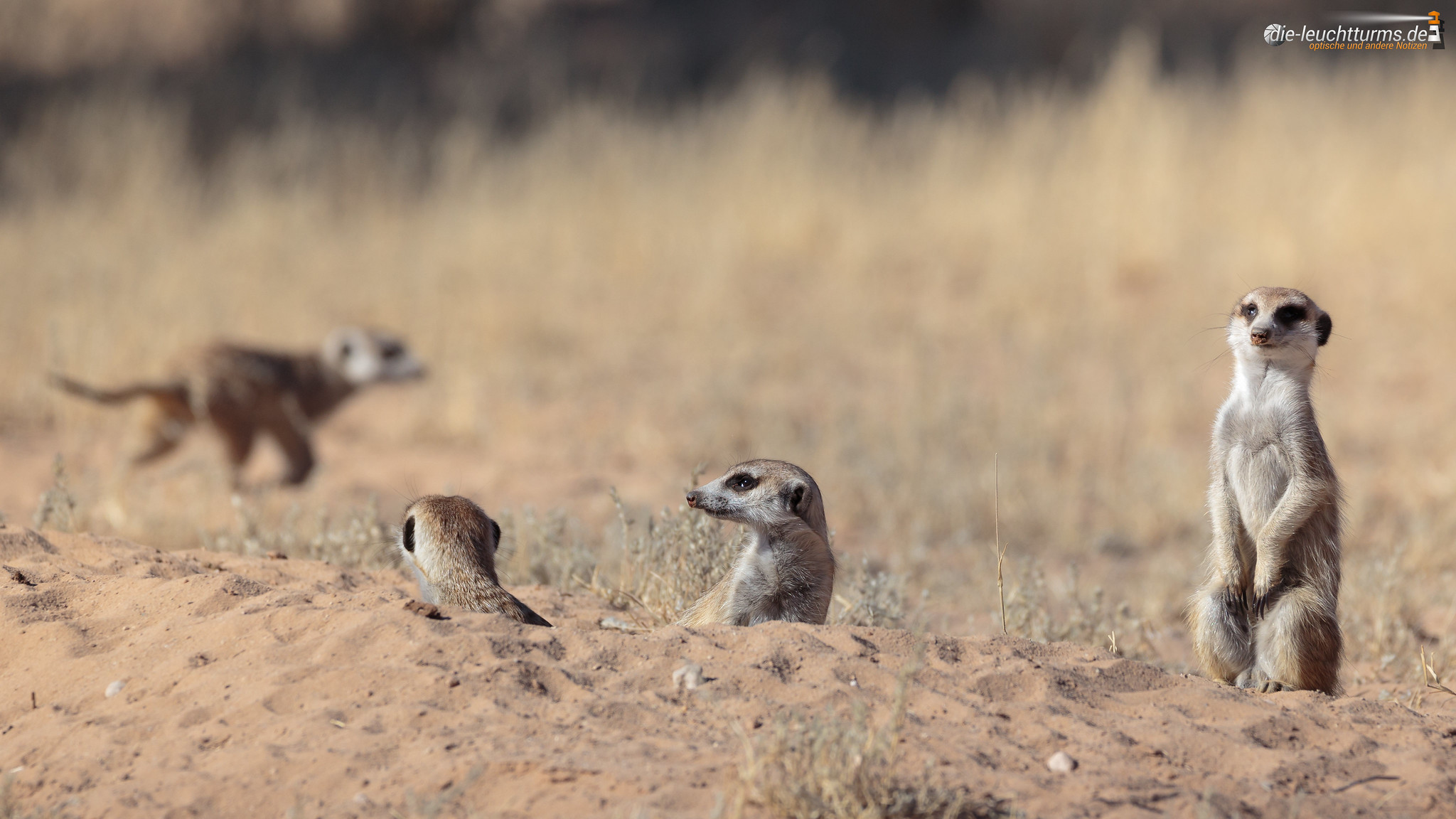 Guardians of the Kgalagadi