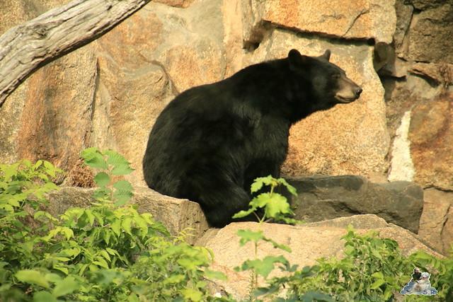 Tierpark Berlin 23.08.2015  0230