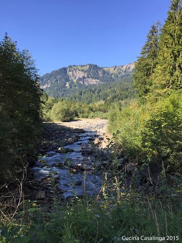 Mellau Alp Buchen Mellenbach 2