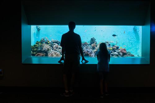 Toledo Zoo aquarium.