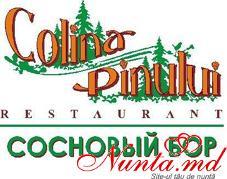 """Restaurant """"Colina Pinului"""" > Foto din galeria `Principala`"""