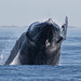 Humpback Whale by toryjk