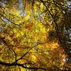 """""""Autumn is a second spring when every leaf is a flower."""" - Albert Camus"""